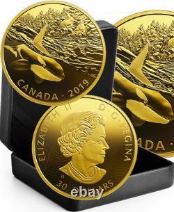 2019 Orca & Sea Lions $30 2OZ Pure Silver Proof Coin Canada Predator Prey Golden